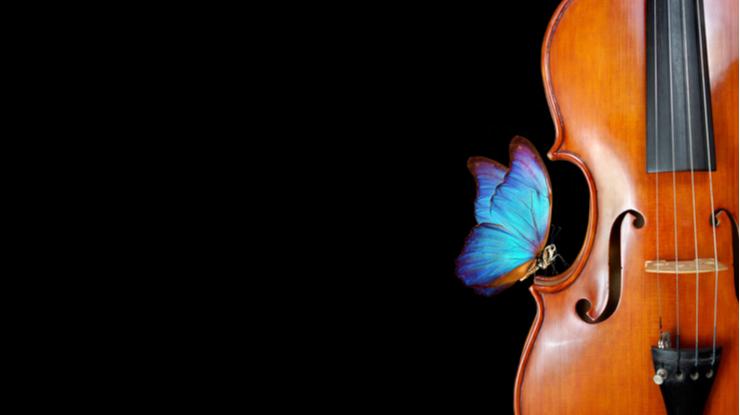 バイオリンと美しい蝶