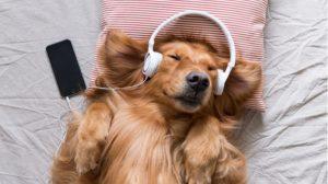 動物をテーマにしたクラシック音楽10選